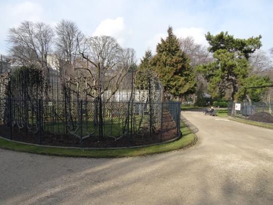Les arbres fruitiers photo de jardin du luxembourg for Arbres jardin du luxembourg