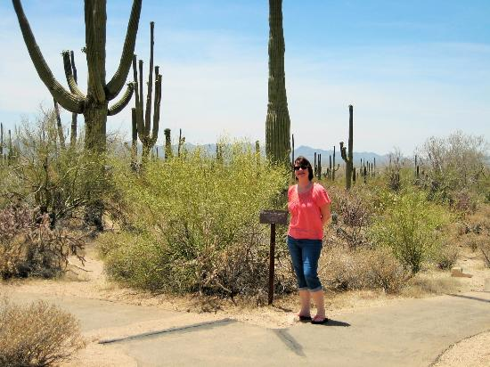 Saguaro National Park, อาริโซน่า: Beautiful desert flower