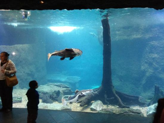 A Largest Fish Tank In The Park Picture Of Dallas World