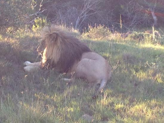 Schotia Tooth and Claw Safari : old grumpy