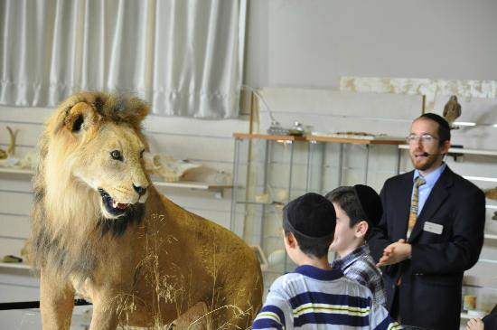 Beit Shemesh, Israel: Lion Encounter