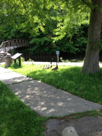 Things To Do In Clinton Il >> Weldon Springs State Park (Clinton) - 2018 All You Need to ...