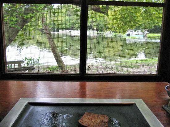 De Leon Springs State Park : View from my table