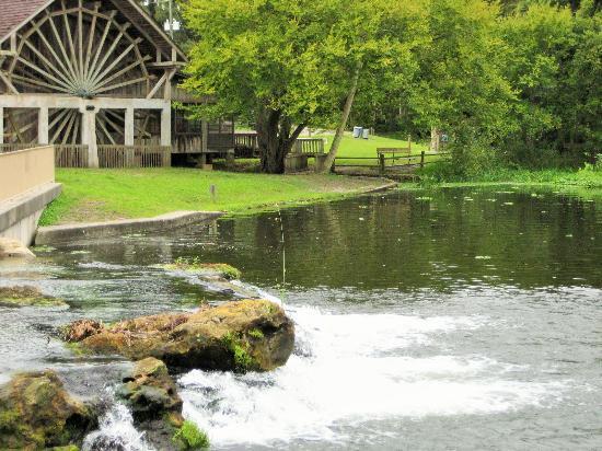 De Leon Springs State Park : Beautiful spring