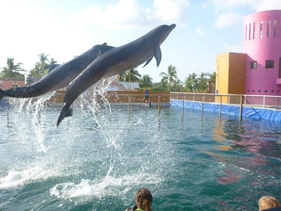 Delfiniti : Dolphins Baby and Mia