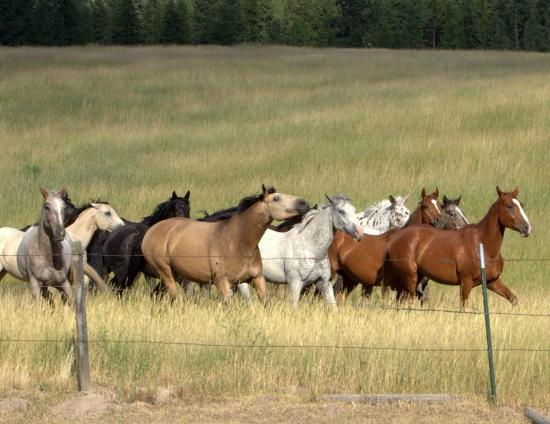 Superior, MT: Horses on the ranch