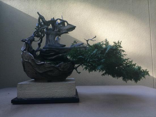 Rhododendron Species Botanical Garden: bonsai
