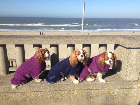Chateau de Montreuil : our lovely cavaliers at the beach