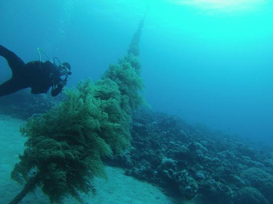 Aqaba 2015 picture of aqaba 39 s anchor diving centre for Aqaba dive