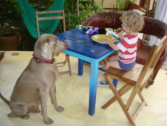La Calma Casa: Eating breakfast under the palapa.  And under Figaro's supervision. :)