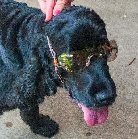 Eumundi, Australien: Markets- buy sunnies for dogs