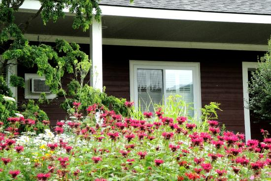 The Stamford Motel & Restaurant: Flower gardens in front of the rooms.