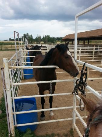 12 Mile Stables: Horses