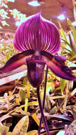 Bird's Botanicals: The colors were stunning.