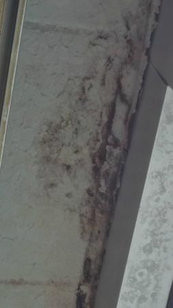 Ramada Greensburg Hotel and Conference Center: mold
