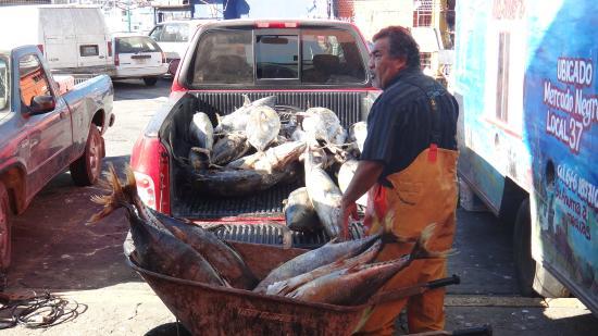 The Fish Market: Frozen Bluefin from last summer, good luck!