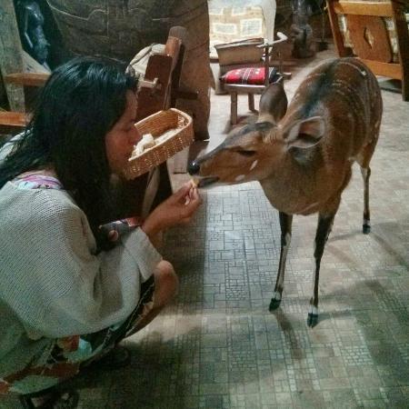 Hotel Mon Afrik: Une des biches