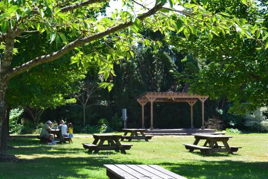 picnicking area at the village green resort picture of the village rh tripadvisor com village green cottage grove or history village green restaurant cottage grove oregon