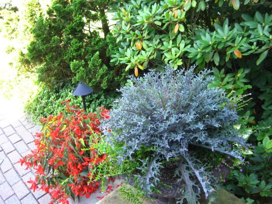 Ivy Tree Inn and Garden : Beautiful plants on the B&B grounds