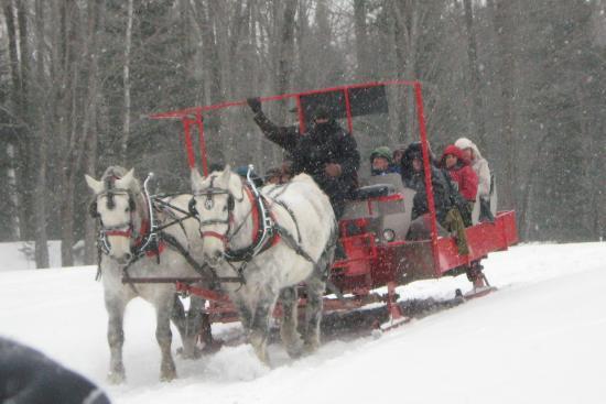 Hillman, MI: Belgian Draft Horses carry the sleigh through the white & drifted snow