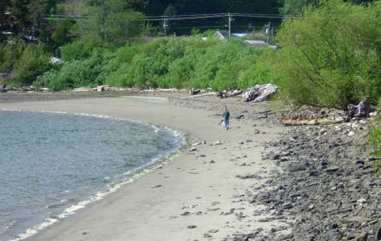Harborview Inn & RV Park: Right out in front of the RV Park, twice a day at low tide