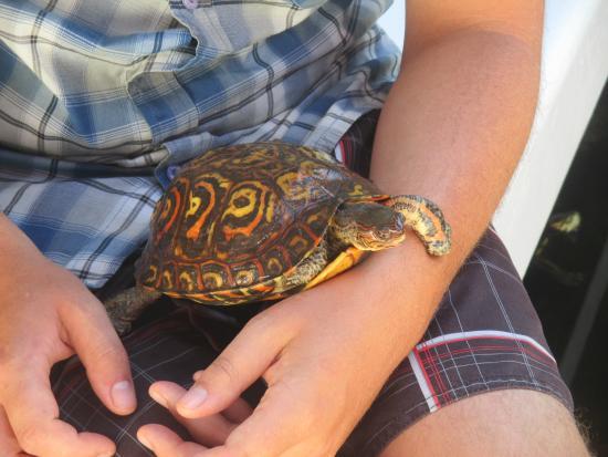 GM Granada Hostel: holding a turtle
