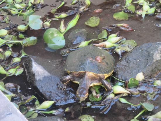 GM Granada Hostel: the turtles garden