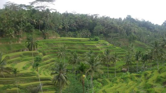 Bali Beta Tour - Day Rours
