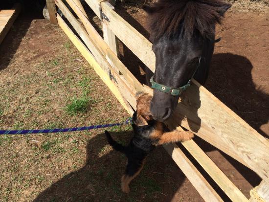 Codrington, Austrália: Lola's new friend