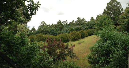 Lyrebird cottages : The early morning freshness!