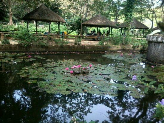 Sino ang wakie picture of la mesa eco park quezon city - La mesa eco park swimming pool photos ...