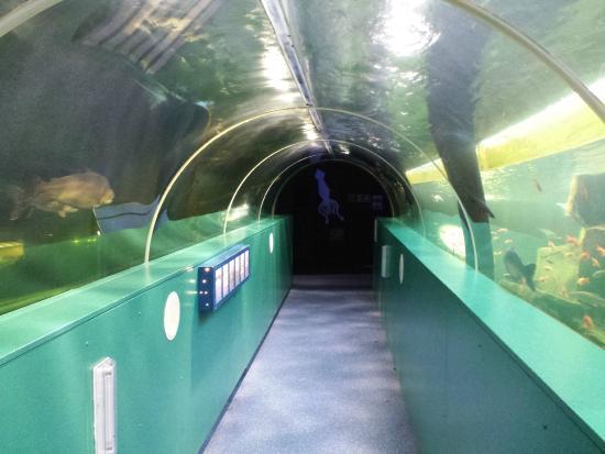 Lakes Aquarium - Foto di Lakes Aquarium, Newby Bridge - TripAdvisor