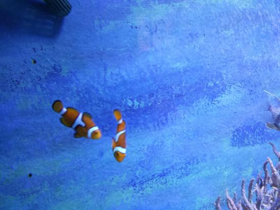 Lakes Aquarium - Picture of Lakes Aquarium, Newby Bridge - TripAdvisor