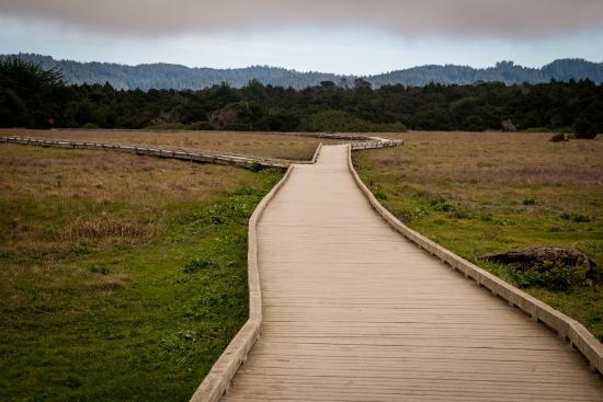 MacKerricher State Park: boardwalk