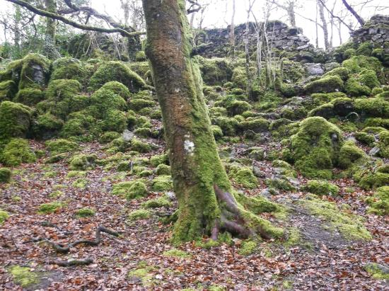 Fairy fort at the summit. Related in lore to the Potato Famine. - Picture  of The Hill of Maeve, Tuam - Tripadvisor