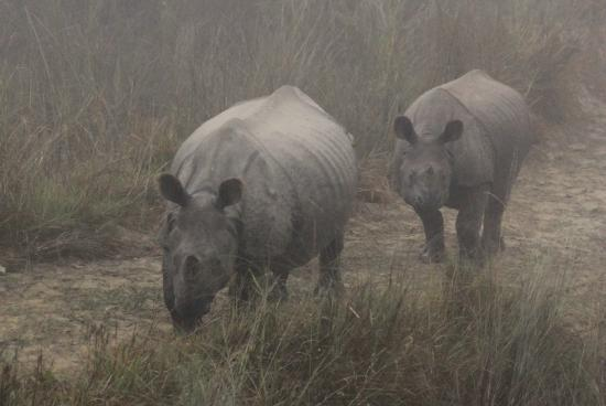 Eco Wildlife Lodge: Rhinos seen on the game drive