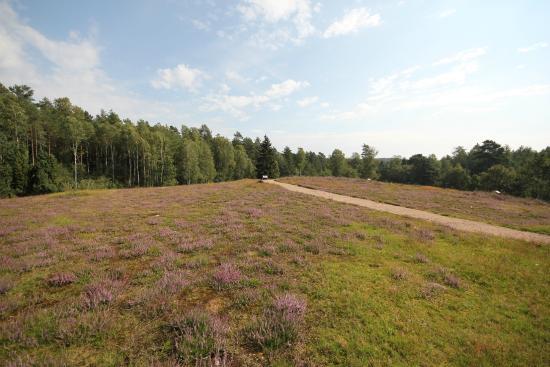 Heideflaechen in Hoesseringen: Heideflächen Hösseringen