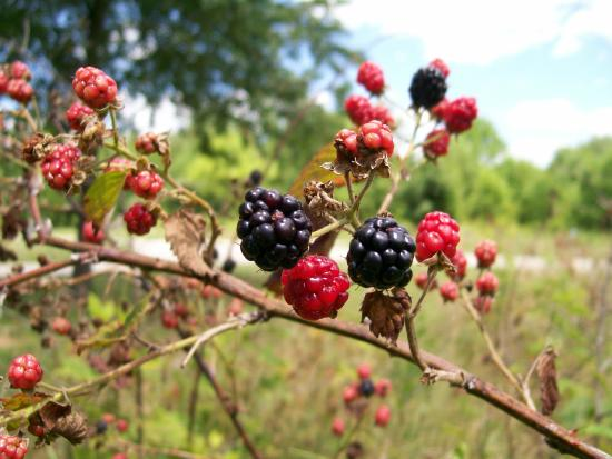 Charlestown State Park: you may collect nuts and berries on State Park property