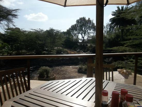 Wildebeest Eco Camp: view from the balcony