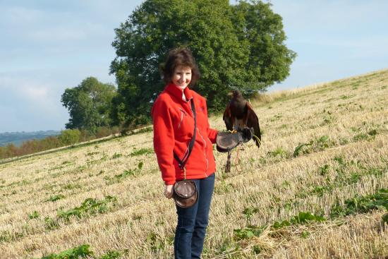 Adventure Falconry: Birthday Hawk Walk
