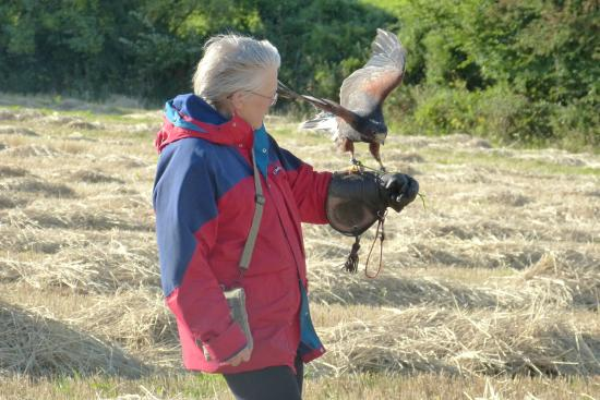 Adventure Falconry: A Special treat
