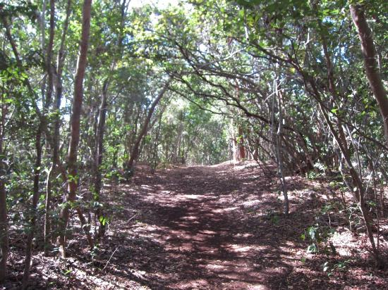 Windley Key Fossil Reef Geological State Park: trail