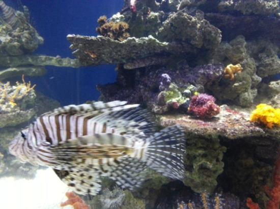 Moreia Foto Di Monterey Bay Aquarium Monterey Tripadvisor