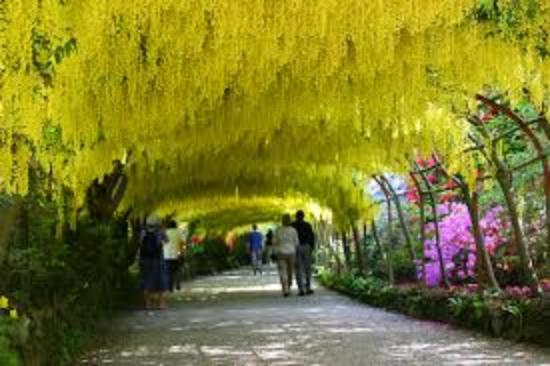 Gorgeous Laburnum Arch  Picture Of Bodnant Garden Talycafn  Tripadvisor With Heavenly Bodnant Garden Laburnum Arch With Charming Market Building Covent Garden Also Garden Restaurant Menu In Addition Pizzeria Covent Garden And Small Garden Ideas Images As Well As Garden Chippings Additionally Government Grants For Community Gardens From Tripadvisorcouk With   Heavenly Laburnum Arch  Picture Of Bodnant Garden Talycafn  Tripadvisor With Charming Bodnant Garden Laburnum Arch And Gorgeous Market Building Covent Garden Also Garden Restaurant Menu In Addition Pizzeria Covent Garden From Tripadvisorcouk