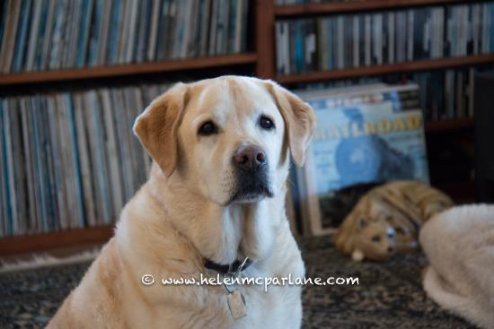 Upcountry Bed and Breakfast: Gabby