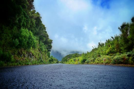 Laurissilva Forest: Indo na estrada