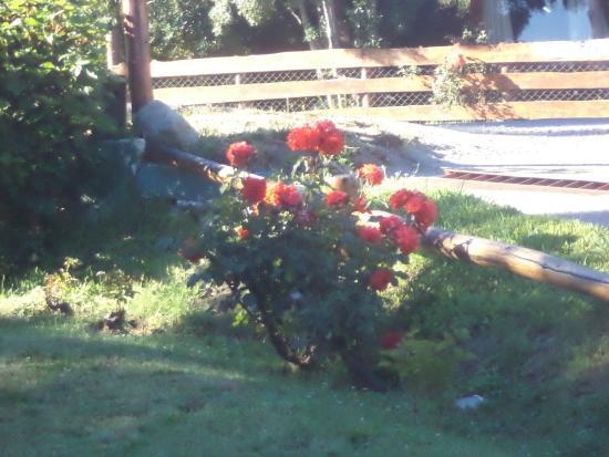 Hosteria El Viejo Molino: Jardín y rosales.