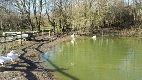 Pond outside Kent Life