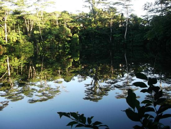 Colo I Suva Rainforest Eco Resort: Raintree Lake