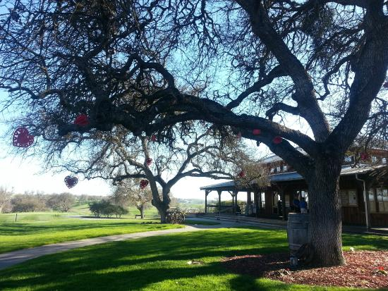 The Grill at Hunter Ranch: View from the cafe to the shop and beyond